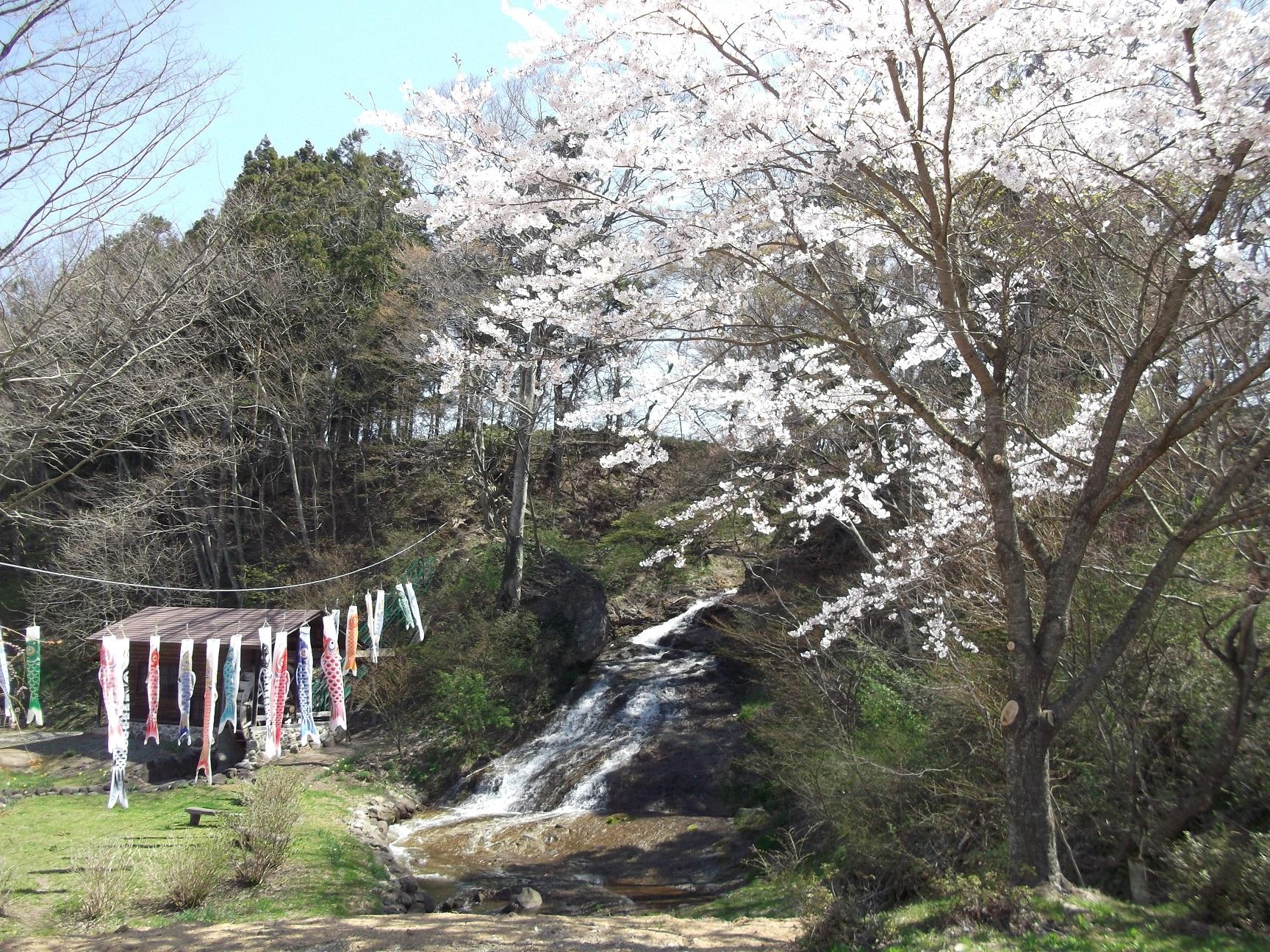 春の親水公園お滝さん